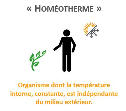 homéotherme